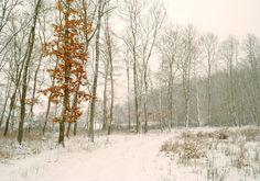 Snowing /II