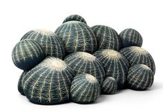 Cerruti Baleri: Canapé Cactus