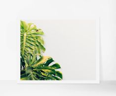 Tropical Print, Botanical Printable Photography, Plant Leaf Printable Art, Modern Art Instant Download, Minimalist Nature Print, Poster