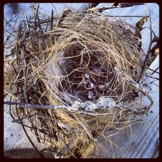 "@carylshawver's photo: ""Nest fell out of our pine tree"""