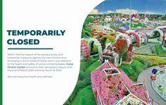 Dubai Miracle Garden Miracle Garden, Most Beautiful Gardens, Exotic Plants, Health And Safety, Dubai, Around The Worlds, Interesting Stuff, Decor, Corona
