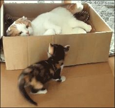 15 Hilarious GIFS of Cats In Boxes | Mommy Has A Potty MouthMommy Has A Potty Mouth