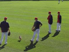 cody cleveland chicken indians | Cleveland Indians win behind Rally Chicken - National Sports ..