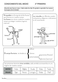 Spanish Lessons For Kids, Spanish Class, Life Science, Science And Nature, Human Life Cycle, Human Body Systems, Life Cycles, Homeschool, Album