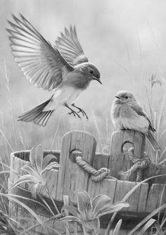 Birds – Graffiti World Landscape Pencil Drawings, Pencil Drawings Of Animals, Pencil Sketch Drawing, Realistic Pencil Drawings, Bird Sketch, Animal Sketches, Bird Drawings, Art Drawings Sketches, Nature Drawing