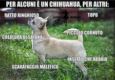 meme italiani che fanno ridere 356342