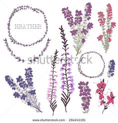 Hand drawn set of heather flowers, wreaths and decoration elements. vector illustration - stock vector