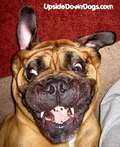 Dangerously hilarious dog