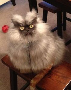 This cat is crazy looking and we love it!