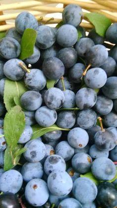 Bylinkové marmelády | Bylinky pro radost Beverages, Drinks, Fruit Garden, Preserves, Pickles, Blueberry, Food And Drink, Alcohol, Vodka