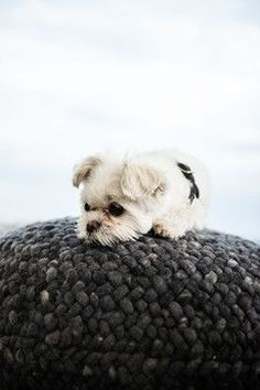 Cute dogs pup   texture Cute Pets