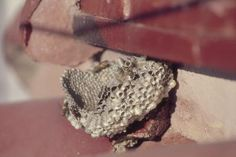 How to Keep a Wasp From Nesting on a Wood Deck   I hear about stuff like the bar soap in the strangest places!
