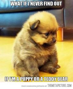 This is adorable. this is like jozi she don't know if shes  a dog or a teddy bear panda