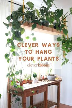 Plants Inside plants House plants Indoor plants Indoor garden Hanging plants - Clever Ways To Hang Your Plants - Inside Plants, Cool Plants, Cactus Plants, Tropical Plants, Plants In The Home, Office With Plants, Kitchen With Plants, Foliage Plants, Garden Plants