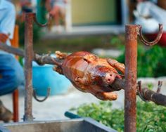 Google Image Result for http://www.thedailymeal.com/sites/default/files/pigsmainhp-istockphoto_thinkstock.jpg