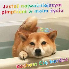 Sweet Memes, Cute Memes, Cute Sentences, Weekend Humor, Cute Words, Sweet Pic, Cute Cats And Dogs, Wholesome Memes, Wtf Funny