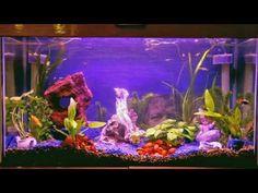 Planted fresh water fish tank....