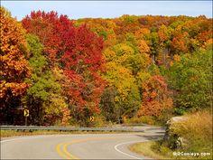 FOLIAGE PICTURES | 48 Ozarks fall foliage photos - 2Cooleys roadside foliage pics