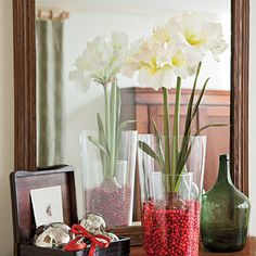 Amaryllis bulb in small vase, surround with cranberries in larger vase #Christmas