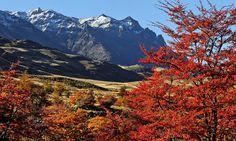 Parque Patagonia | Patagonia Park | Aysen Region, Chile