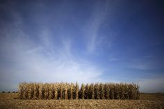 A new report says climate change could severely impact the region's agriculture and economy.