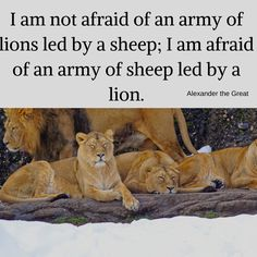 It's not about the lions we fight, it's about who leads them! Alexander The Great, Lions, Sheep, Centre, Army, Technology, Animals, Inspiration, Women