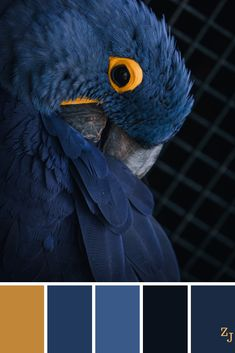 Color palettes 755971487435020511 - ZJ Colour Palette 929 – Source by Color Schemes Colour Palettes, Blue Colour Palette, Color Combos, Color Blue, Color Schemes Design, Modern Color Palette, Inspiration Art, Moodboard Inspiration, Color Balance
