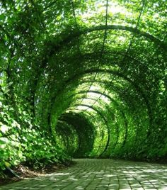 secret spaces in garden - Google Search  Love green covered walkways!