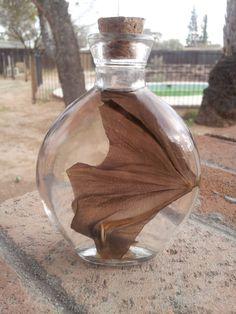 Wet Specimen - Bat Wing. $32.00, via Etsy.