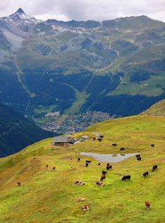 Sierre, Valais, Switzerland.  The only thing better than owning a farm, would be to own one in Switzerland!