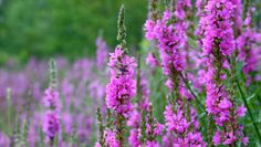 5 invasive plants to keep out of your garden