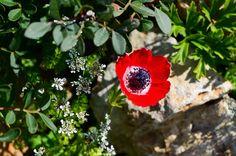 "Фото из альбома ""Anemone - Анемон"" - GoogleФото"
