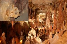 Petralona Cave - Greece 700,000 years old and refutes current theories of 250 to 300,000 years.