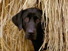 hiding in the hay !