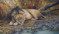 """Dreams of battles won & lost "" African lion Acrylic painting Wildlife Art, Art Oil, Watercolor Paintings, Art Photography, Lion Sculpture, Walking, Lost, African, Dreams"
