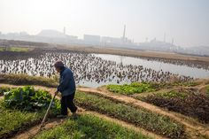 China Aims for Food Security as Pollution Destroys Crop Land
