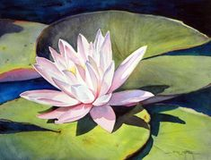 Pink Waterlily A small pond near a rock garden these would look very nice. Watercolor Quilt, Watercolor Sunflower, Watercolor Flowers, Watercolor Paintings, Watercolors, Lily Painting, Lotus Art, Batik Art, Art Drawings Sketches Simple