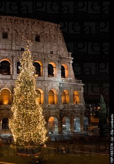 Christmas in Rome...all these centuries later, a tree stands in front of the coliseum where Christians were slain!