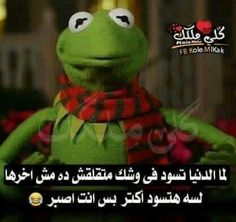 اصبررر Arabic Memes, Arabic Funny, Funny Arabic Quotes, Sarcastic Humor, Funny Jokes, Hilarious, Touching Words, Sarcasm Only, Kermit The Frog