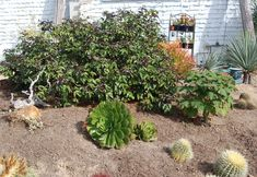 Succulent Gardening ~ My Succulent Garden