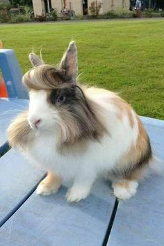 Donald Thump!!!! The Dodo - 21 Adorable Bunnies - 21 Bunnies You Won't Believe Actually Exist ...