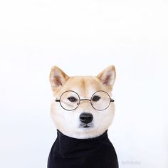 """""""Stay hungry. Stay foolish. And sometimes, just stay."""" -Shibe Jobs"""