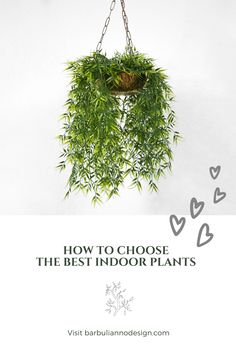 How to Choose the Best Plants for Your Home?  What you really want is the plant's ability to give its maximum, and the way to do so is to choose the plants according to your own environment.Plants boost your mood, productivity and creativity. They reduce noise levels, stress, depression and respiratory difficulties. #indoorplantscleanair #aircleaningplants #indoorplantslowlight #indoorplantsdecor #indoorplantsdetox #bestindoorplants