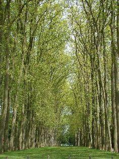Garden Versailles