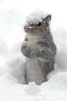 Squirrel in the Snow - Best Android Wallpaper