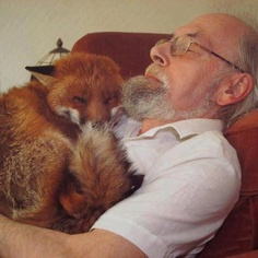 copper the fox was found sick and injured by the side of the road and nursed back to health by this man. not strong enough to return to the wild, he's got a pretty nice life with his human friend.