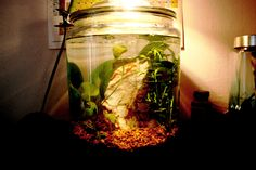 My 2 gallon desktop jar