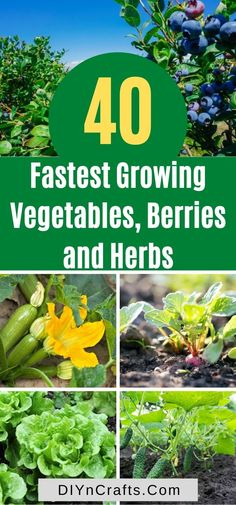 Experience quick and effective harvests by consciously planting these fastest-growing crops. Perfect for small gardens container gardening and beginner gardeners. Small Garden Containers, Container Gardening Vegetables, Vegetable Gardening, Fast Growing Vegetables, Growing Herbs, Gardening For Beginners, Gardening Tips, Bush Beans, Bountiful Harvest