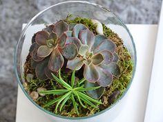DIY : faire un terrarium pas cher