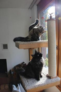 Cat furniture - Thierry and Uranus on their cat tree